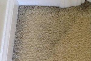 Carpet Filtration Line