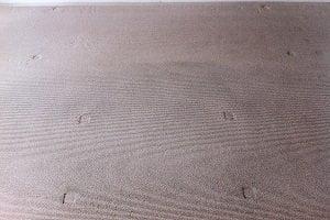 Carpet Indentations