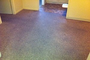 Most Common Carpet Problems And Their Solutions Chem